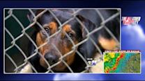 Humane Society Over Capacity With Animals Displaced By Storms