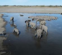 Hundreds of elephants found dead in Botswana
