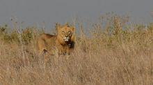 Trophy-hunting foes sue to shut down Trump wildlife board