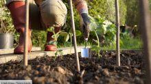 Potager : pourquoi il ne faut jamais cultiver une plante deux années de suite au même endroit