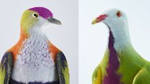Forget winged rats — photographer snaps some of the world's most unique and vibrant pigeons