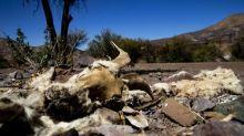 Chile: Trockenheit verschärft Corona-Krise