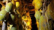 Uzbekistán, paraíso de los melones, festeja cosecha excepcional
