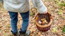 Cinco lugares para encontrar setas este otoño