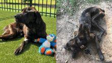 Mulher deixa cachorro sem comer por um mês para se vingar de ex