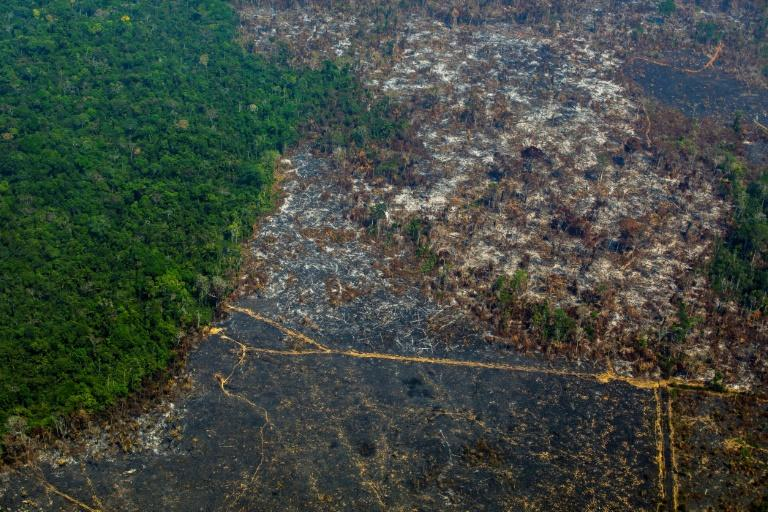 Amazon deforestation highest ever on record, climbs over 100% in November