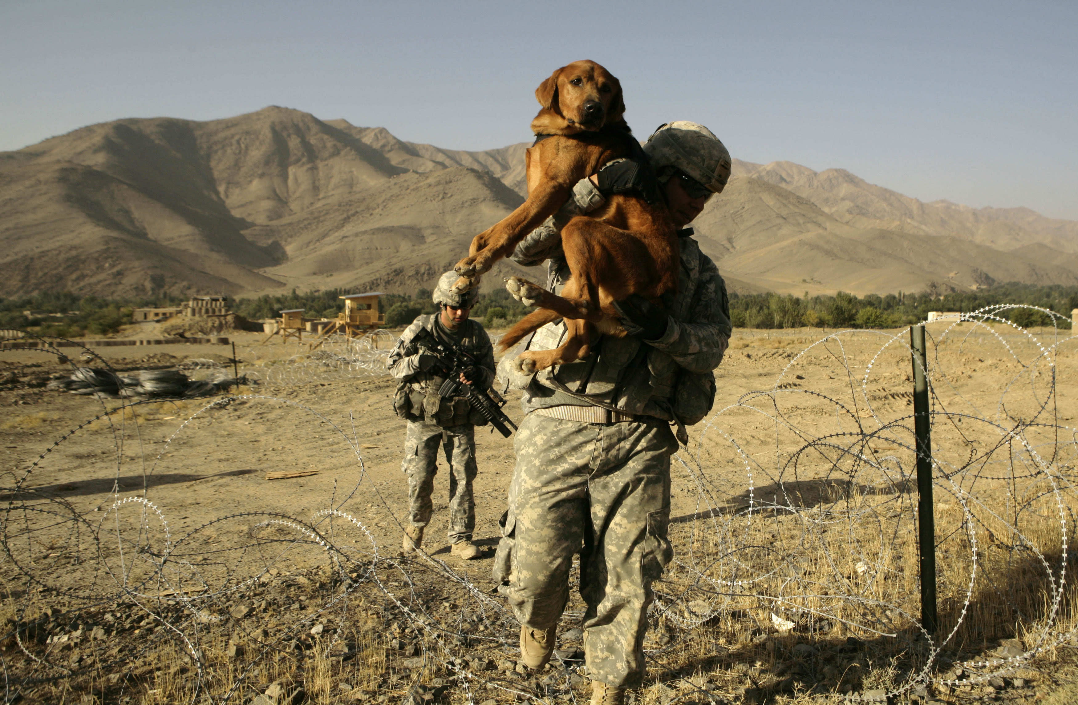 FILE - In this file picture taken Monday, Sept. 28, 2009, U.S. Army dog handler Sgt. Adrian Garcia, 24, from El Paso, Texas, carries Staff Sgt. Kirby over a concertina wire fence during a patrol with 3rd Brigade, 10th Mountain Division in the Jalrez Valley in Afghanistan's Wardak Province. Moscow and Washington are intertwined in a complex and bloody history in Afghanistan, with both suffering thousands of dead and wounded in conflicts lasting for years. Now both superpowers are linked again over Afghanistan, with intelligence reports indicating Russia secretly offered bounties to the Taliban to kill American troops there. But analysts suggest that the two adversaries actually have more in common, especially when it comes to what they want to see in a postwar Afghanistan: a stable country that does not serve as a base for extremists to export terrorism. Both countries also are aligned in their opposition to militants from the Islamic State group. (AP Photo/Maya Alleruzzo, File)