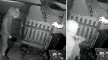 Appeal to find man who set his dog on a pet cat in an 'extremely disturbing' attack