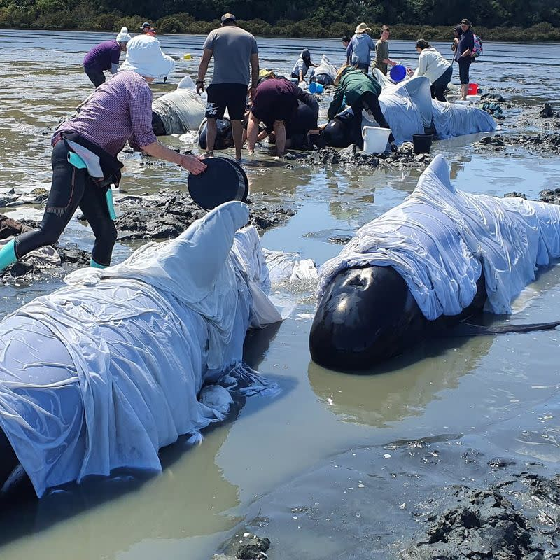 More than dozen whales die after getting stranded on New Zealand beach