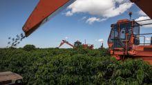 Popularidad de café gourmet crece en plena crisis de productores