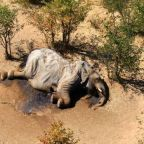Scientists have some theories on why hundreds of elephants are mysteriously dying in Botswana