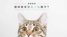 習慣發現︰貓咪都有分左/右撇子?