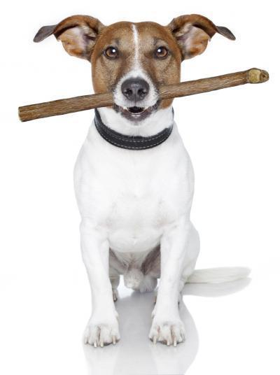 Dog Treat Made from Bull Penis May Pose Health Risks