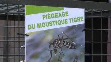 Dans les Landes, des pièges imitent l'odeur humaine pour neutraliser les moustiques tigres