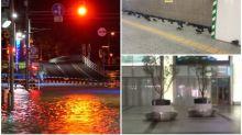【有片】東京颱風21號威力強勁 白鴿湧入新宿站避難
