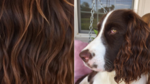 People On Twitter Are Getting Hair Inspo From Their Dogs