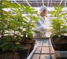 Canada braces for cannabis gold rush