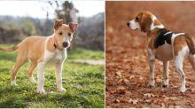 6 dog breeds that love long autumn walks