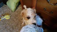 Weirdo dog hilarious nibbles on owner's leg