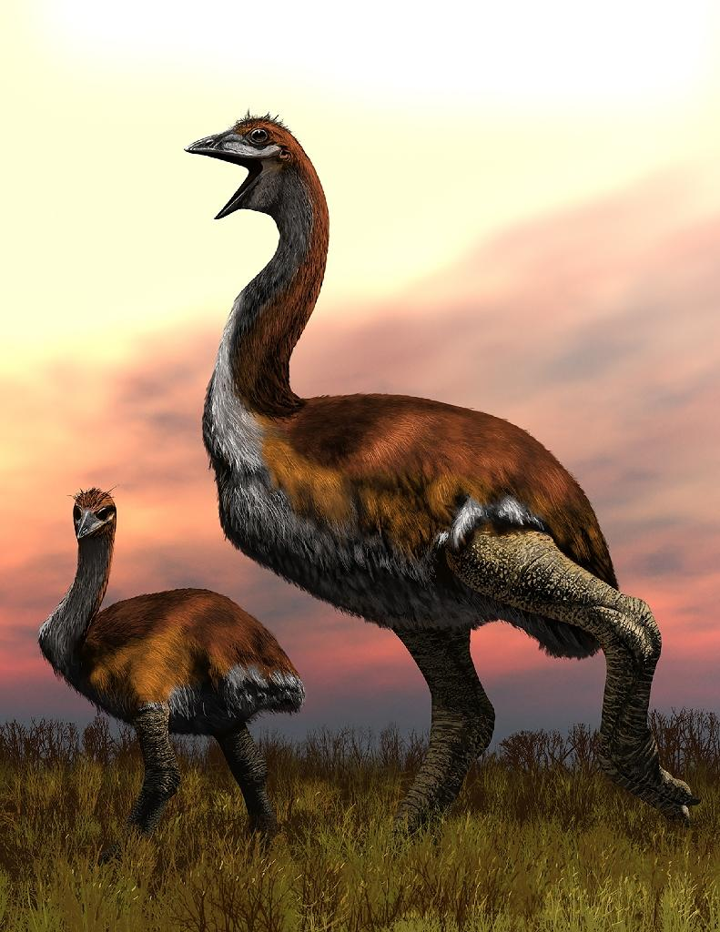 Big bird: One species of elephant bird stood over three-metres tall and could weigh as much as a fully grown giraffe
