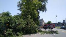 Murió una mujer por la caída de un árbol sobre una parada de colectivos en Plaza Constitución