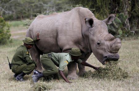 Worlds last male northern white rhino dies