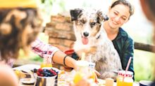 There's only one thing worse than dogs: the arrogance of dog owners