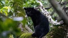 Black panther spotted in Karnataka's Nagarhole Tiger Reserve