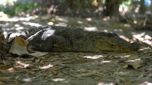 Panic as crocodile blocks hospital entrance in Zimbabwe