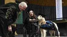 Good News des Tages: Assistenzhund bekommt von Universtität Ehrendiplom verliehen