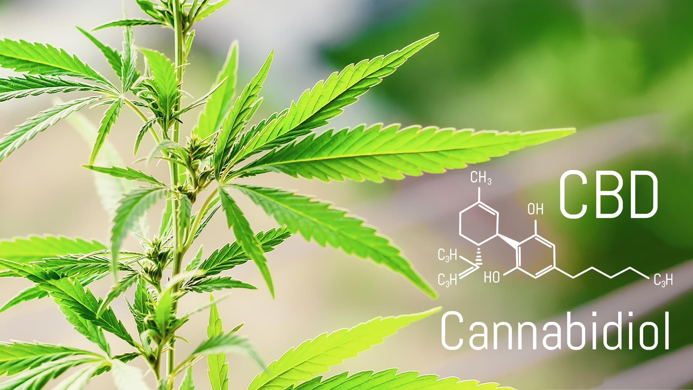 3 Top CBD Stocks to Buy in June