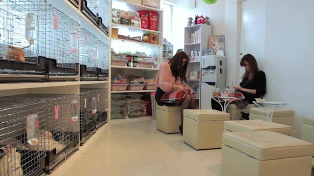 Tokyo Bunny Cafe Serves Up Snuggles to Stressed-out Customers