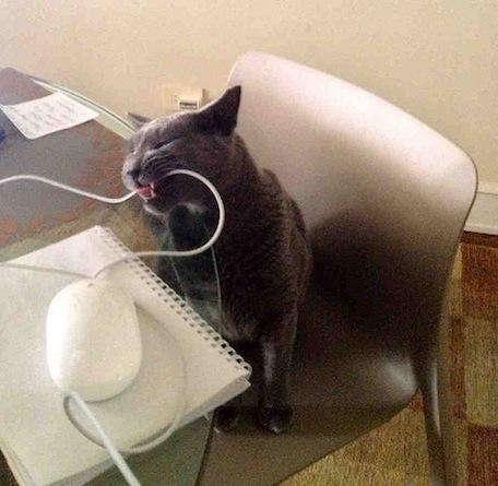Caturday: Gorky catches a mouse