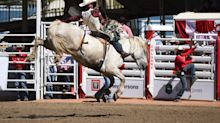 Calgary politician introduces bill to make rodeo Alberta's official sport