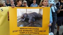 British campaigners call on Indian PM Modi to end torture of captive elephants