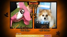 Dog Gone Scary Contest: Lulu the Pilot vs Gif the Selfie