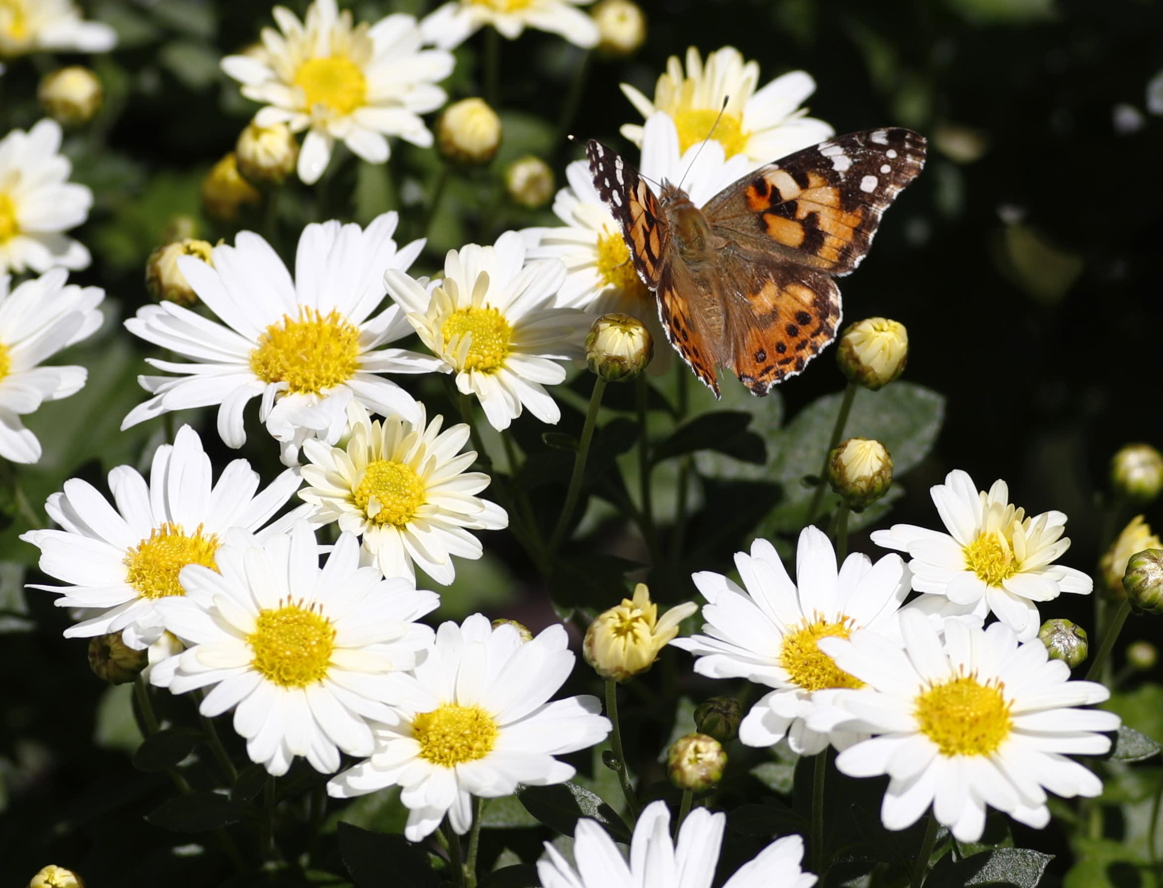 Massive wave of butterflies lights up Denver weather radar