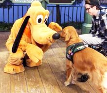 Service Dog Atlas Meets Pluto During Trip to Disney World