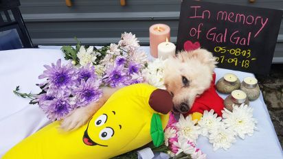 Call for tighter rules on pet cremation services following Platinium saga: AWOs