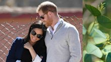 Prince Harry and Meghan Markle's Royal Nursery Features Rosemary-Infused Paint