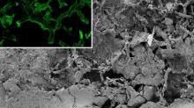 Les champignons sont apparus sur Terre 300 millions d'années plus tôt que prévu