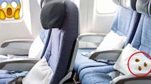 How to Spot Bed Bugs on Your Airplane Seat