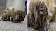'Worst we've seen': Stray dog loses 3kg of dreadlocks after makeover