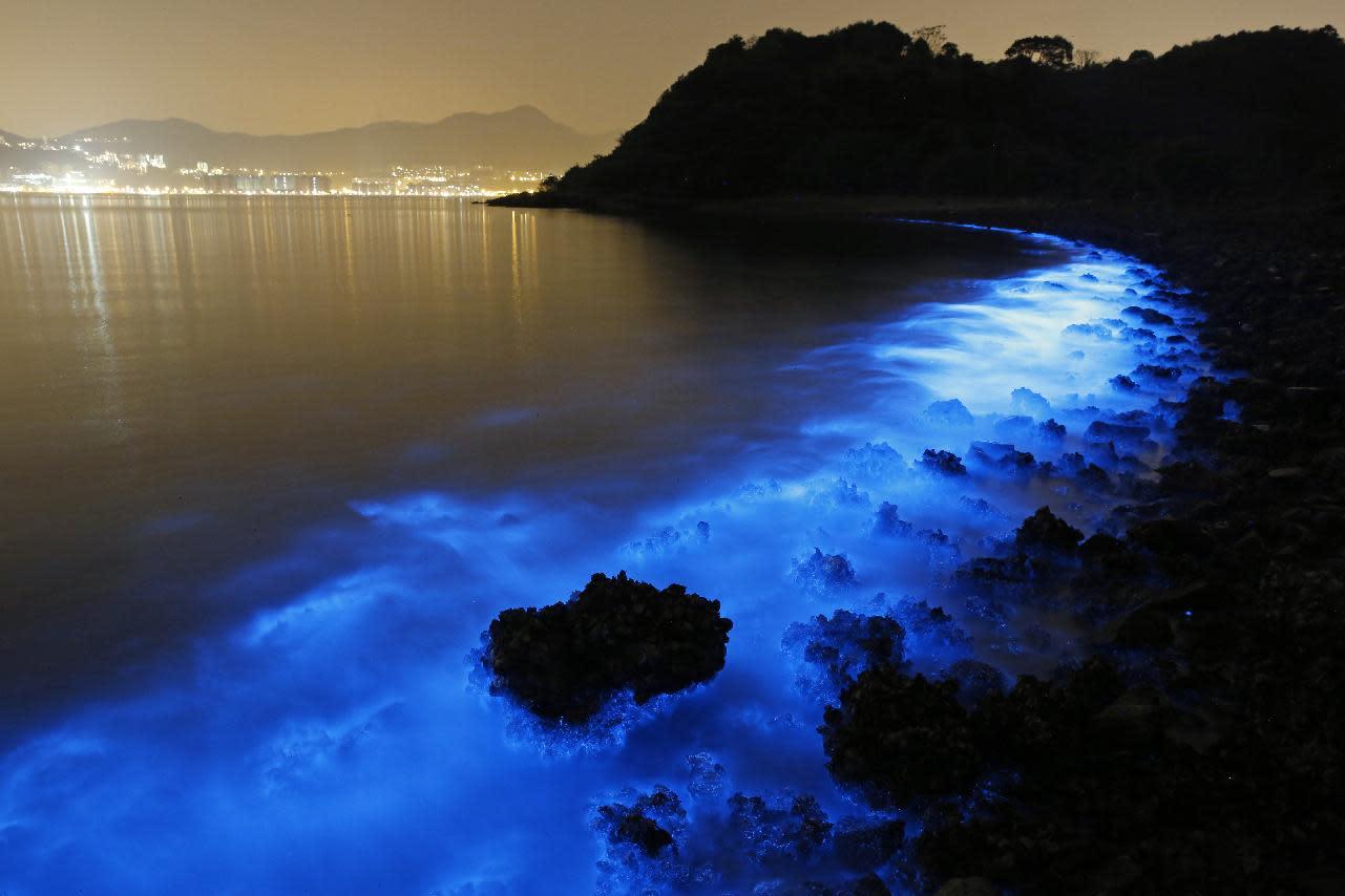 Qué es la bioluminiscencia y en qué playas sucede » Intriper.