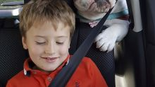 This dog's terrified passenger face is proof his owner's a bad driver