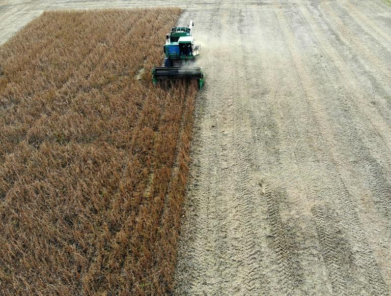 US soybeans like these being harvested in the state of Maryland are among products hit by Chinese tariffs (AFP Photo/MARK WILSON)