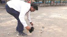 Mumbai: 32-year-old constable dies of snakebite in Kurla