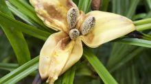 'Paradise island' hosts untold botanical treasures