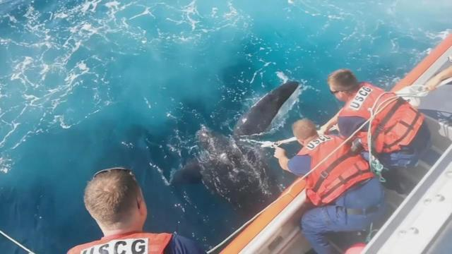 800-pound leatherback turtle rescued in New Jersey