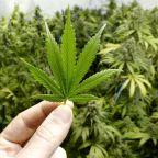 Stock Markets Are Record-Bound; Marijuana Stocks Soar